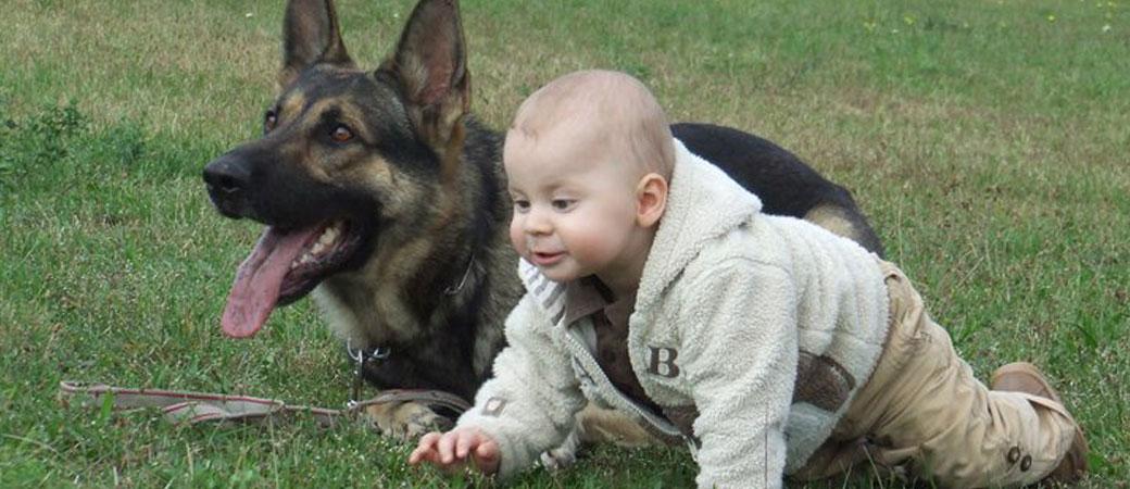 KŐBÁNYA HAPPY DOG KUTYAISKOLA